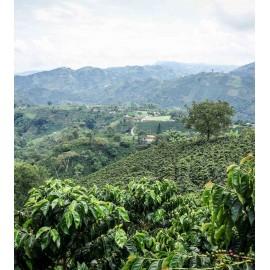 Flaute (Koffeinfrei) - Kolumbien